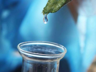 丝瓜水的功效与作用